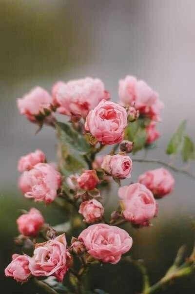 Хочу цветов)