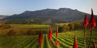 Побывать на винодельнях ЮАР