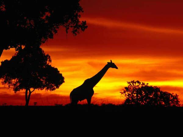 отправиться на Африканское сафари
