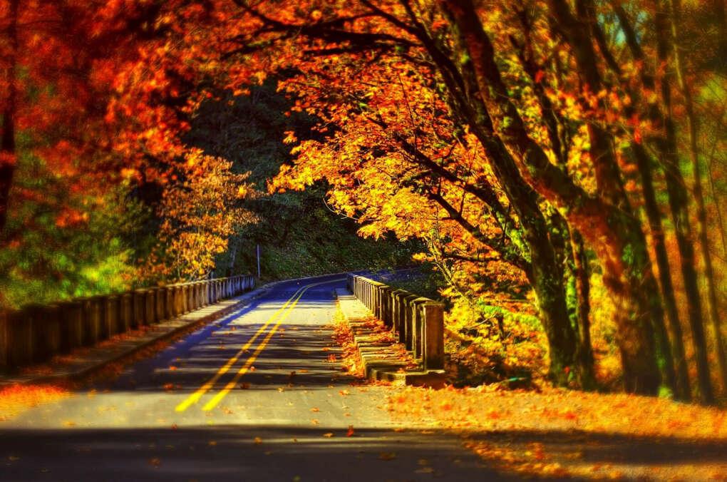Вечную осень..