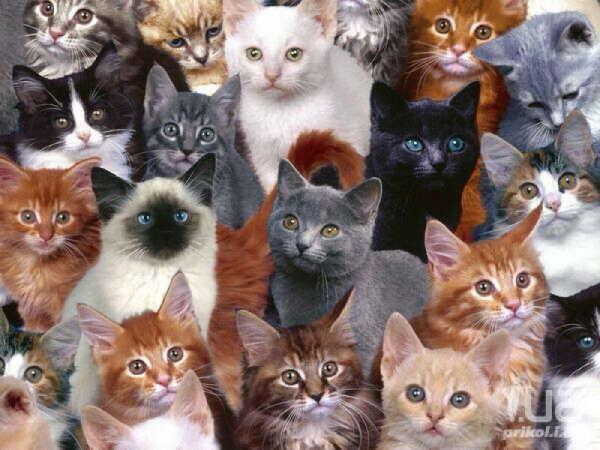 Много котиков:3