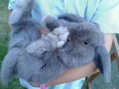 Хочу себе кролика.