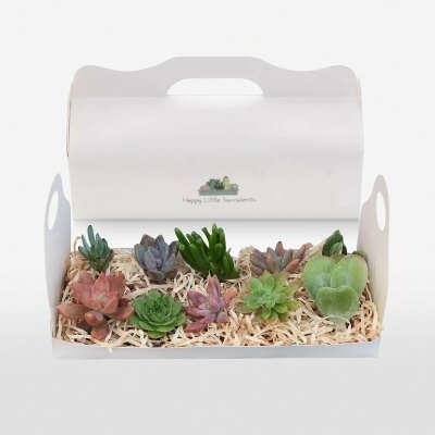 HAPPY LITTLE SUCCULENTS Succulent Gift Box