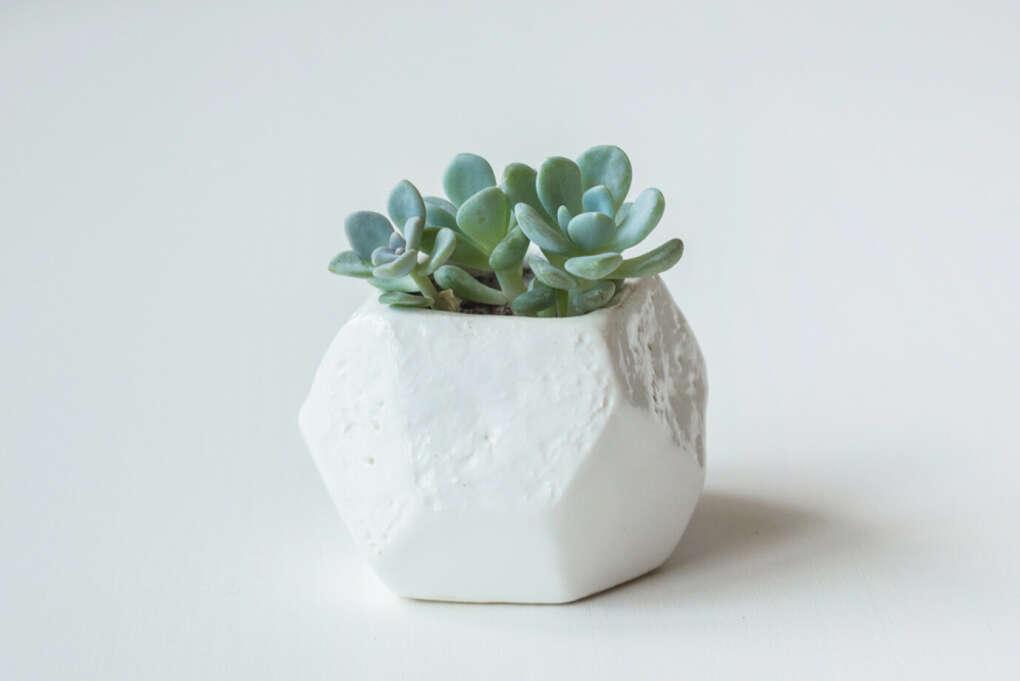Горшок с суккулентами Mix Pot | «Ламбада-маркет»