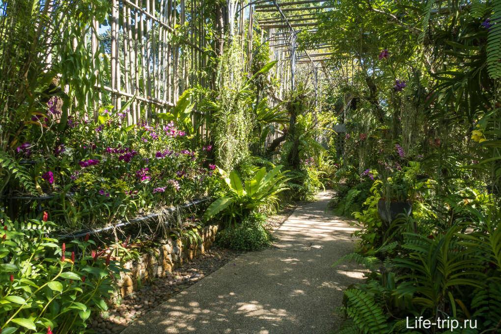 Сходить в ботанический сад