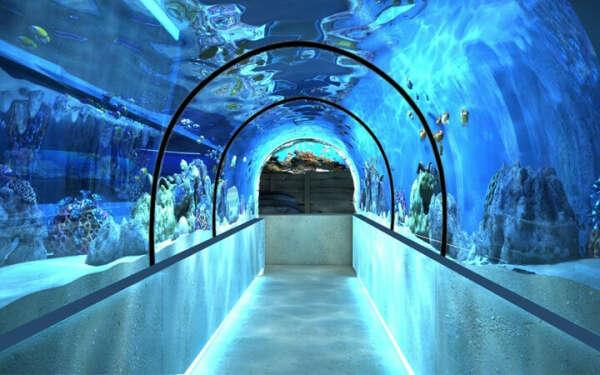 Сходить в океанариум