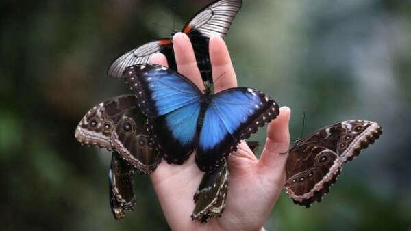 Оранжерея бабочек