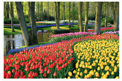Тюльпановый тур в Амстердам Весной