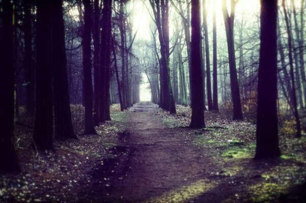 Вернуть лесные прогулки