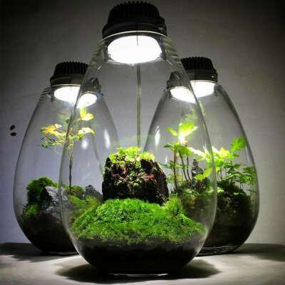 флорариум с  подсветкой
