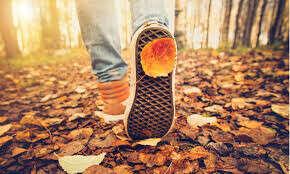 поход в лес во время золотой осени
