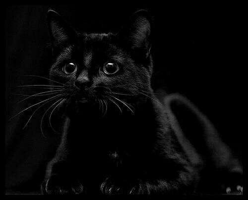 Приютить черную кошку
