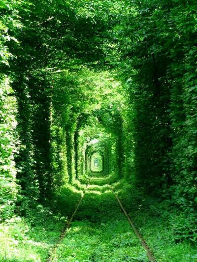 Тоннель любви в городе Клевань (Украина)
