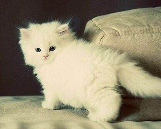 Маленький котеночек