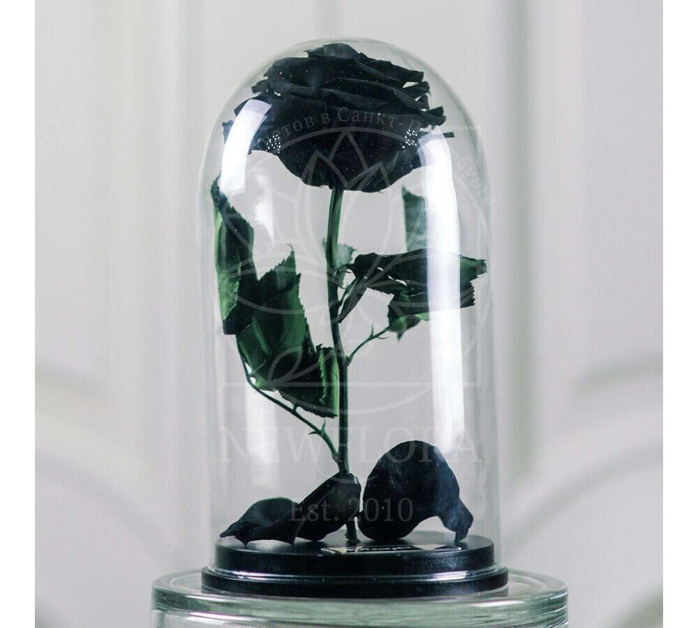 Живая вечная черная роза в колбе