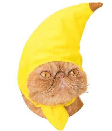Шапочка-банан для кота!