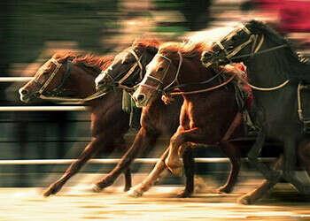 Побывать на конных скачках