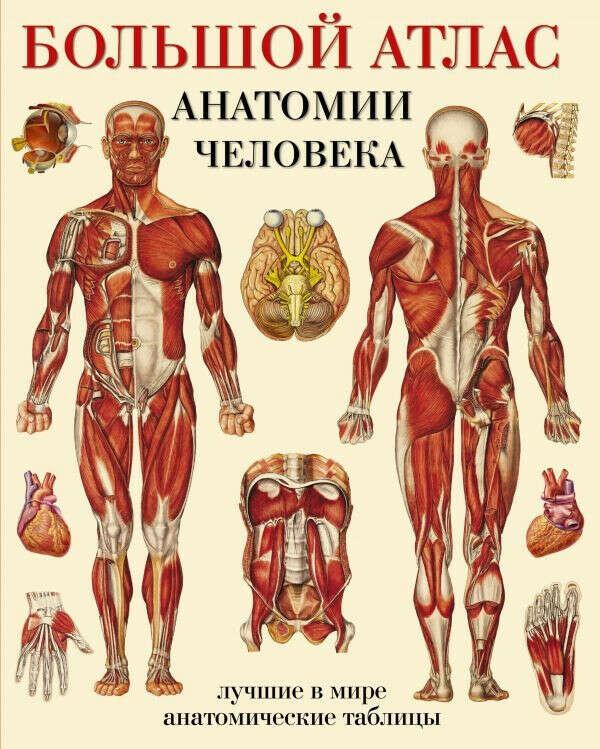 Большой атлас анатомии человека | Нет автора
