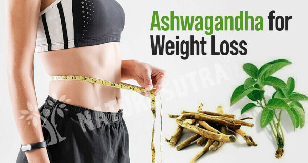 Ashwagandha For Weight Loss: Know How to Use - Nature Sutra