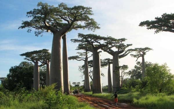 Тур на Мадагаскар 2015: остров ручных сифаков