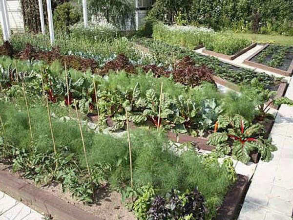 У меня на даче вырастит вся посаженная этой весной зелень. Её будет много и она будет отличного качества.