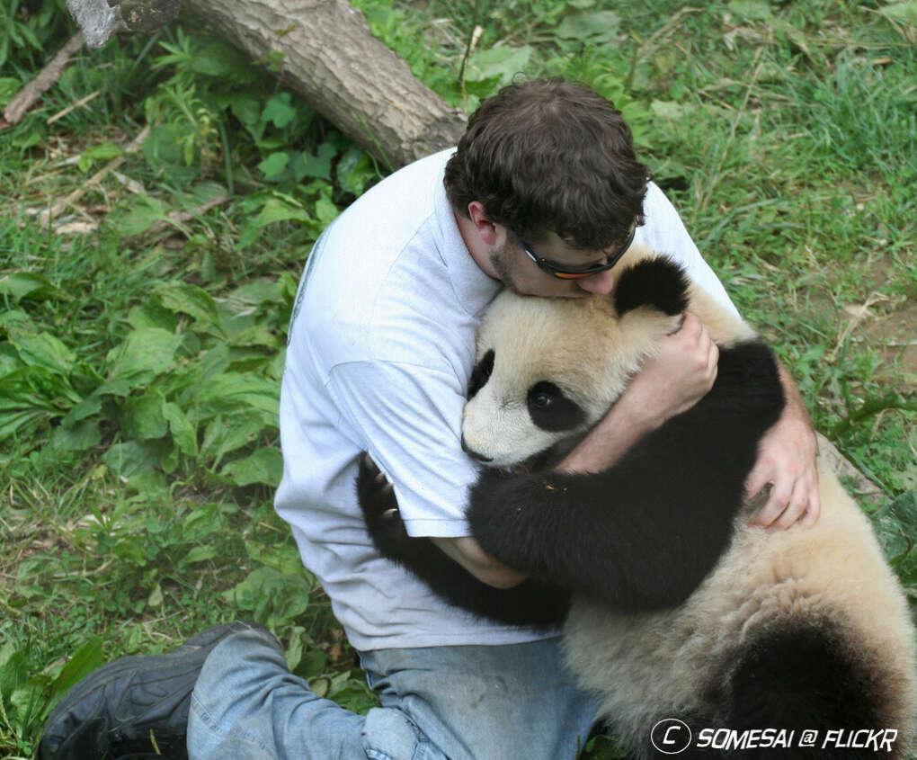 Обнять панду