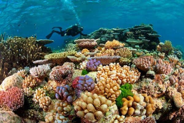 Поплавать в Большом барьерном рифе