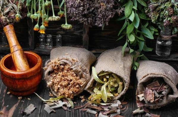 Собирать, сушить и продавать лечебные травы