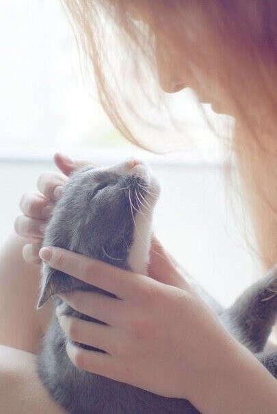 хочу котенка