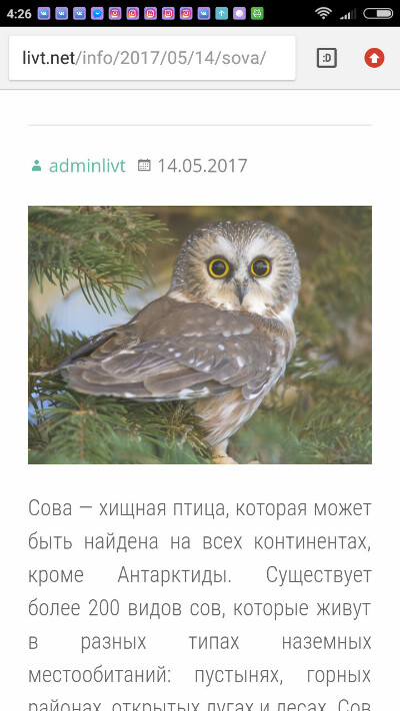 Музей сов