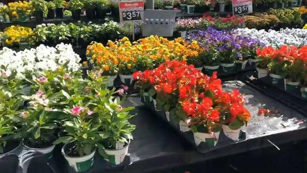 саженцы цветочки