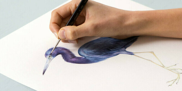 Naturalist Bird Illustration with Watercolors. A course by Antonia Reyes Montealegre , Naturalist Illustration