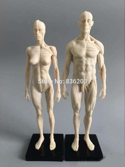 Анатомические куклы