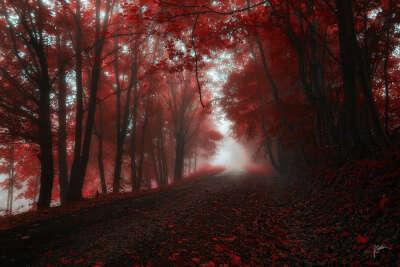 Побывать в алом лесу