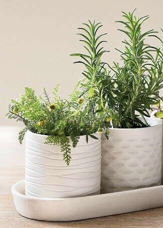Кухонные травы в горшочках
