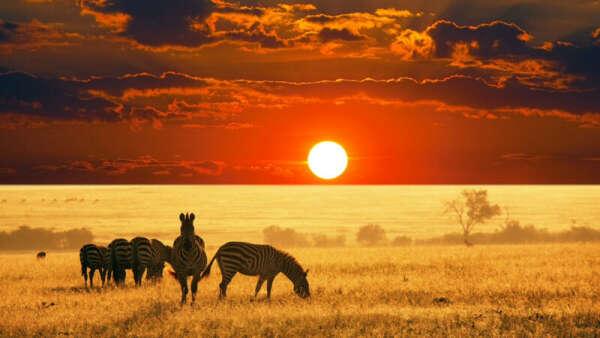 Хочу в Африку. На сафари.