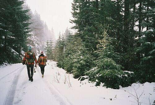 Гулять зимой по лесу