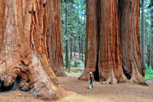 Национальный парк Секвойи и Королевского каньона в штате Калифорния