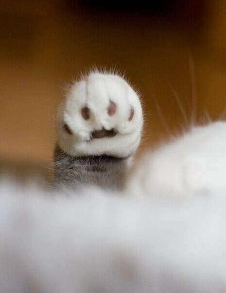 Хочу котенка :)