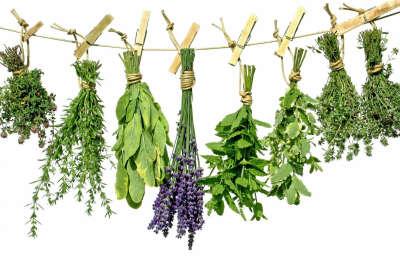 Травы и травяные чаи