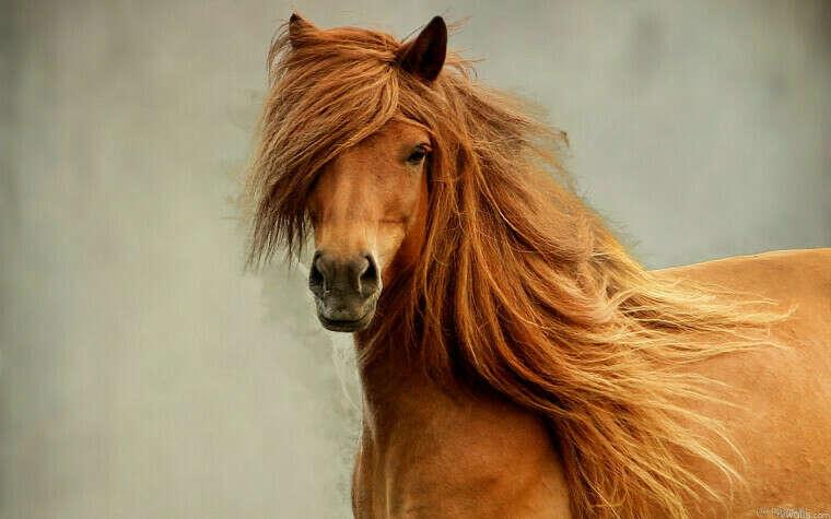 Занятие иппатерапией или конная прогулка