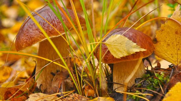 Сходить за грибами