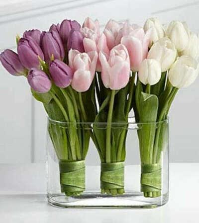 выращивать тюльпаны