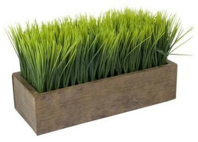 трава на подоконнике