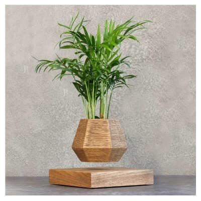 Левитирующее растение