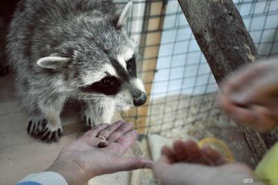 Посетить контактный зоопарк
