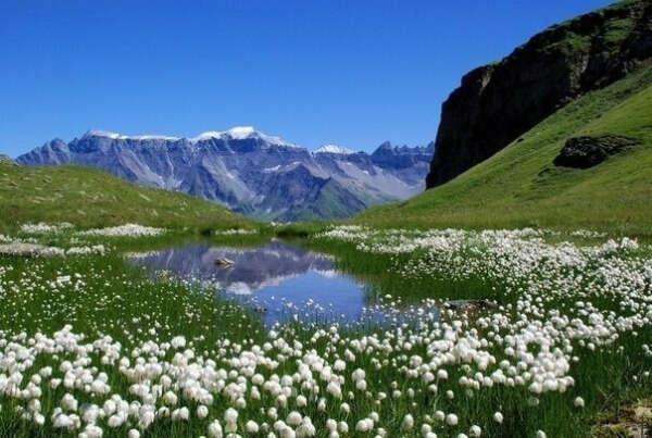 Альпы весной
