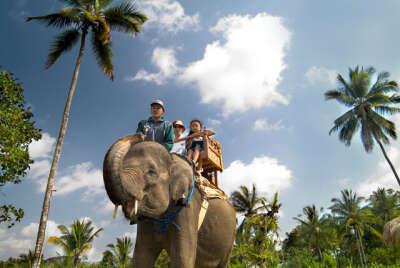 Прокатиться на слоне