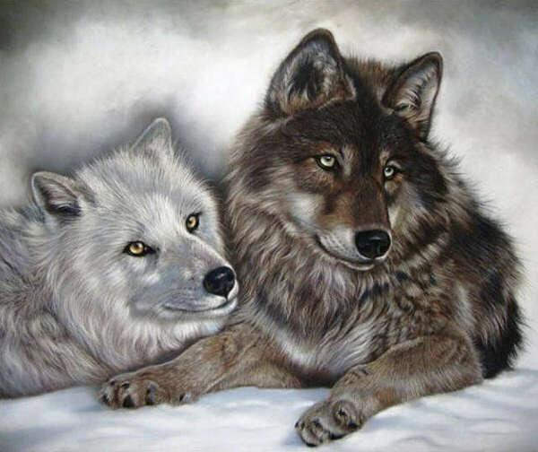 Картина с волками, на стену
