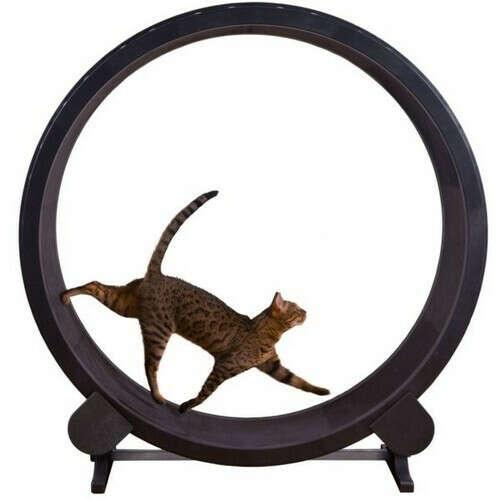 Колесо для кота